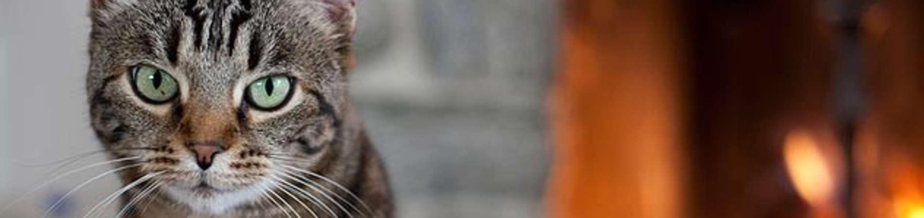 10 Mejores Guarderías para Gatos | Precios - Cronoshare