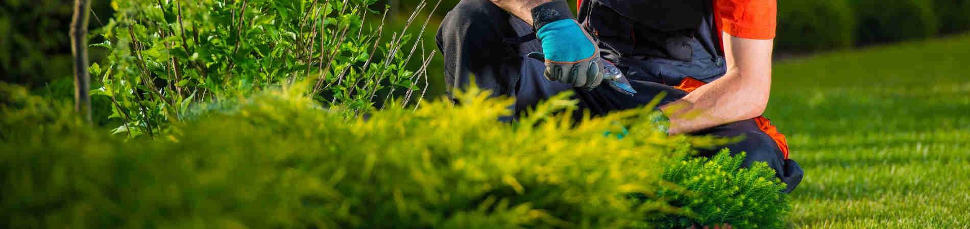 Jardinero para podar fumigar y talar parets del vall s for Jardineros a domicilio