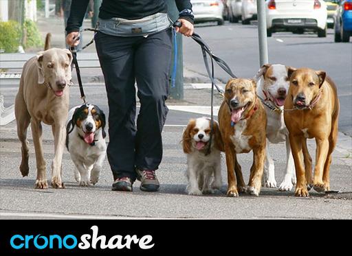 15 normas imprescindibles para paseadores de perros