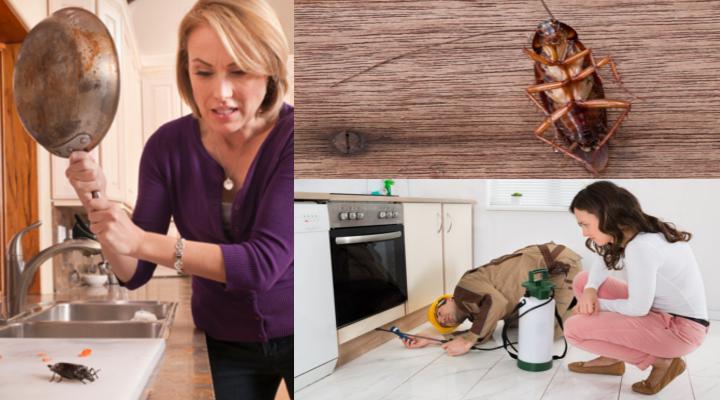 5 remedios eficaces sobre c mo eliminar las cucarachas de casa - Eliminar sarro en casa ...