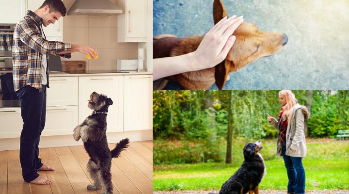 Cómo Ser Adiestrador Canino y Conseguir Clientes