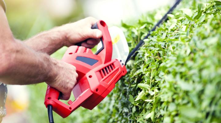 C mo crear una empresa de jardiner a consejos tiles for Empresas de jardineria en girona