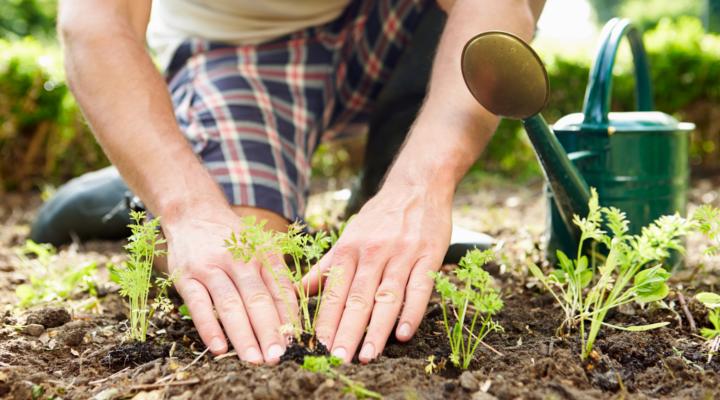 Cómo Montar una Empresa de Jardinería en España
