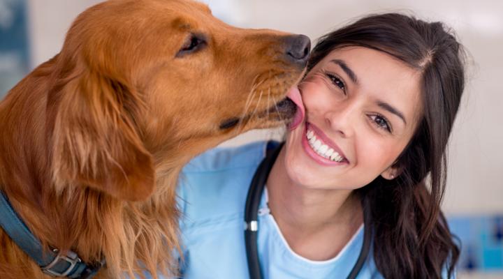 montar una clínica veterinaria