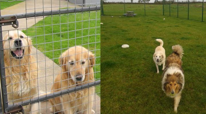 Como Montar una Residencia Canina y Conseguir Clientes