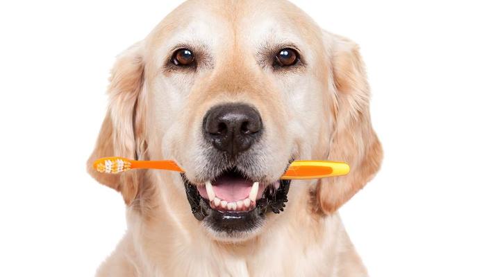 Consejos sobre la higiene dental para perros blog de - Todo para nuestras mascotas ...