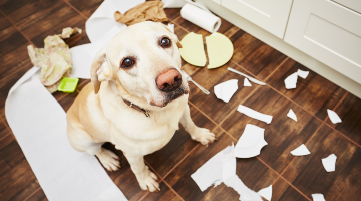 mantener una casa limpia con mascotas