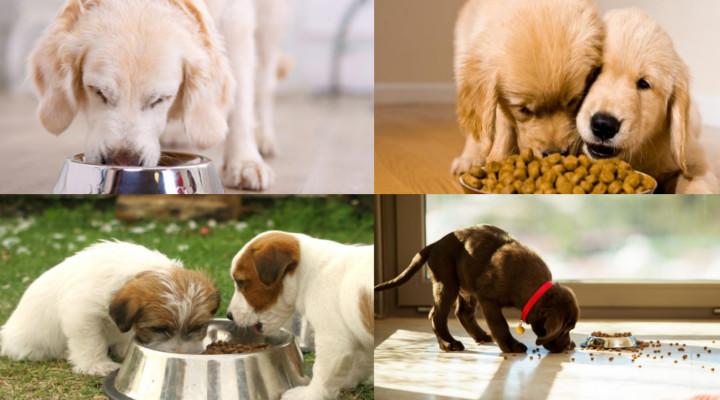 ¿Cuál es el Mejor Alimento para un Perro?