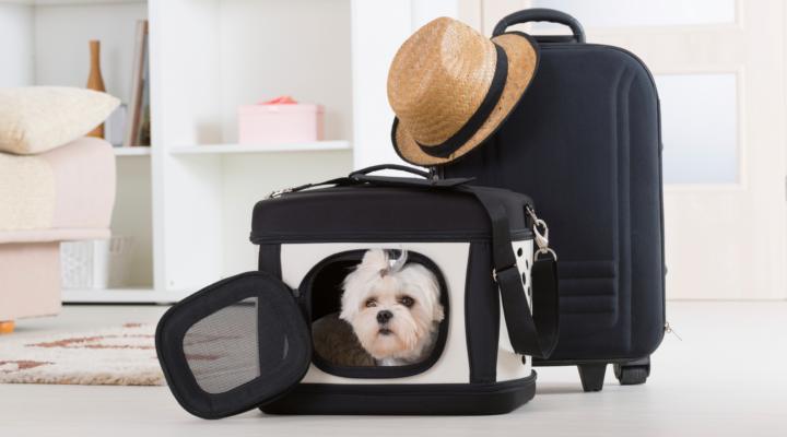 Lugares a los que Viajar con Mascotas