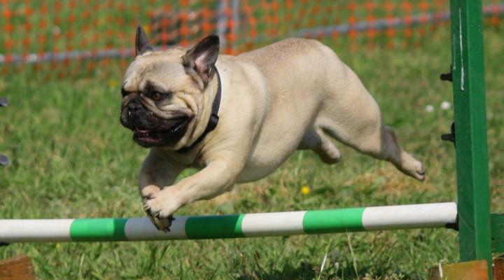 Trucos y Consejos para Adiestrar a un Perro