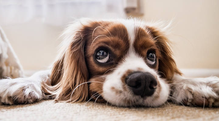 ¿Cuánto cuesta castrar a un perro?