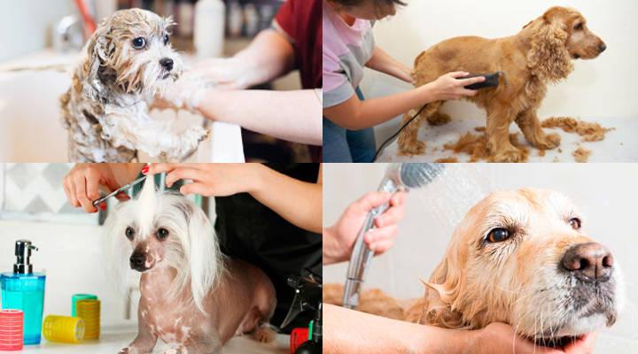 Conseguir clientes para peluquería canina