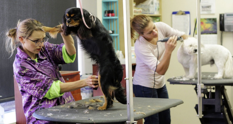ser peluquero canino (1)