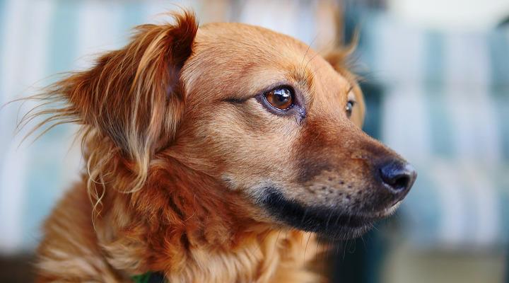 Cómo dejar un cachorro solo en casa – Pautas antes de dejar un cachorro solo