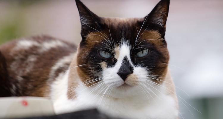 ¿Cuánto cuesta castrar a un gato?