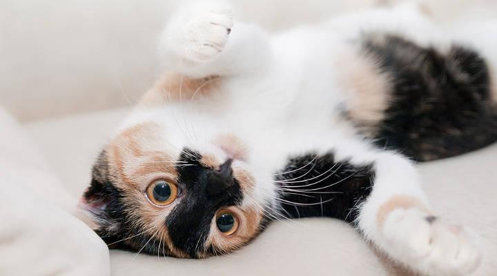 Precios de castrar a un gato
