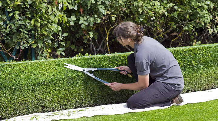 Cuánto cuesta mantener un jardín