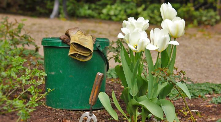 Cuánto cuesta el mantenimiento de jardines
