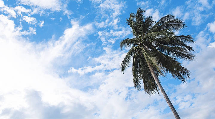 Precio de la poda de palmeras