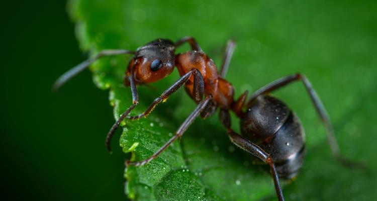 Cuánto cuesta fumigar hormigas
