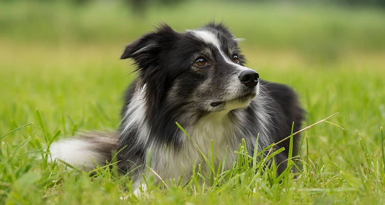 Cuánto cuesta sesión de fotos para mascotas