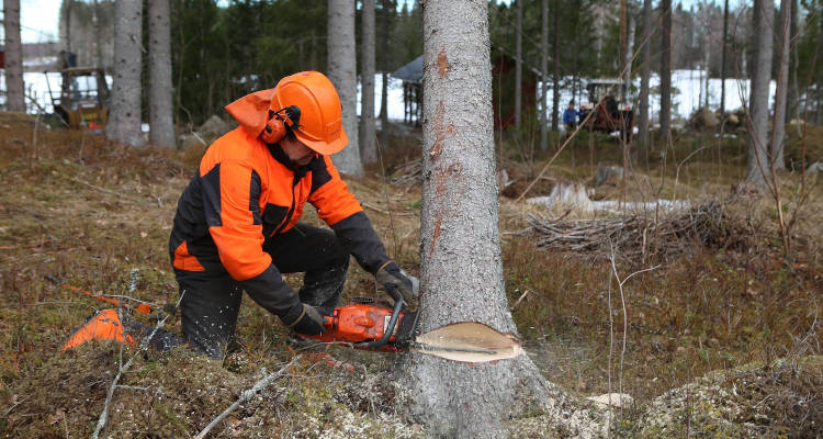 Cuánto cuesta talar un árbol