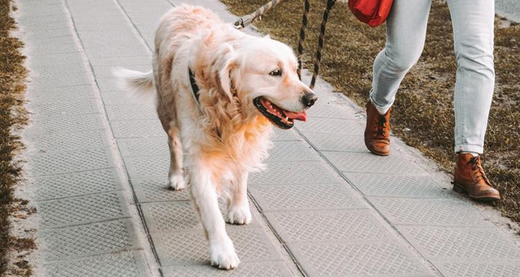 Cuánto cuesta un paseador de perros
