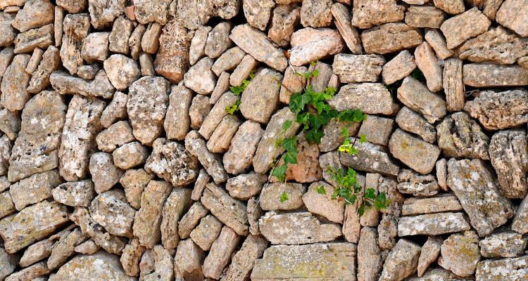 Decorar un muro de piedras con plantas