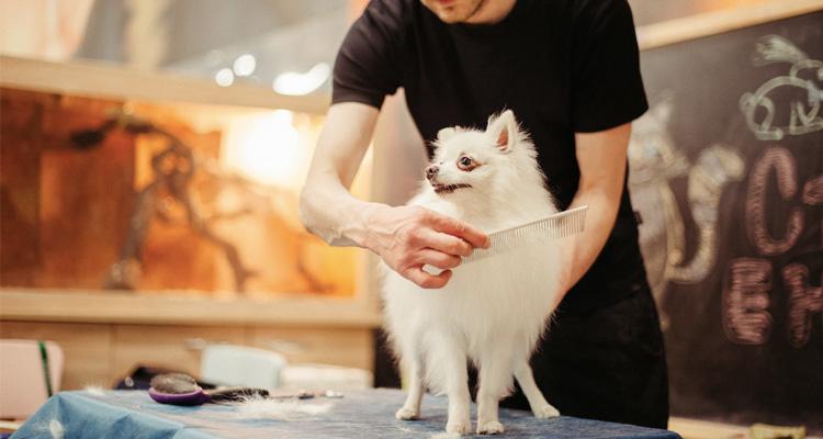 Cuánto cuesta peluquería canina